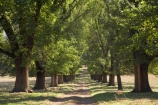 australasia;Australasian;Australia;australian;avenue;avenues;Bombowlee;driveway;driveways;Gundagai-_-Tumut-Rd;Gundagai-_-Tumut-Road;N.S.W.;New-South-Wales;NSW;South-New-South-Wales;Southern-New-South-Wales;tree-trees;Tumut