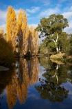 australasia;Australasian;Australia;australian;autuminal;autumn;autumn-colour;autumn-colours;autumnal;brook;brooks;calm;color;colors;colour;colours;creek;creeks;deciduous;fall;flow;Jindabyne;Kosciuszko-N.P.;Kosciuszko-National-Park;Kosciuszko-NP;leaf;leaves;N.S.W.;New-South-Wales;NSW;placid;poplar;poplar-tree;poplar-trees;poplars;quiet;reflection;reflections;river;rivers;season;seasonal;seasons;serene;smooth;Snowy-Mountains;Snowy-Mountains-Drive;South-New-South-Wales;Southern-New-South-Wales;still;stream;streams;Thredbo-River;tranquil;tree;trees;water;wet