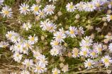 Anugu;arid;Australasia;Australia;Australian;Australian-Desert;Australian-Deserts;back-country;backcountry;Desert;Deserts;flower;flowers;N.T.;National-Park;National-Parks;Northern-Territory;NT;Outback;red-centre;The-Outback;Uluru-_-Kata-Tjuta-National-Park;Uluru-_-Kata-Tjuta-World-Heritage-Area;UNESCO;Unesco-world-heritage-area;wildflower;wildflowers;World-Heritage-Area;World-Heritage-Areas