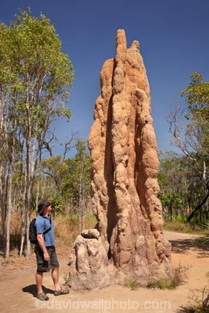 ant-hill;ant-hills;anthill;anthills;Australasia;Australia;Cathedral-mounds;Cathedral-Termite-mounds;Litchfield-N.P.;Litchfield-National-Park;Litchfield-NP;male;man;men;N.T.;Northern-Territory;NT;people;person;termitaria;termite-colonies;termite-colony;termite-hill;termite-hills;termite-mound;termite-mounds;termite-nest;termite-nests;Top-End;tourism;tourist;tourists
