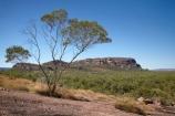 Anbangbang;Australia;Australian;Burrunggui;eucalypt;eucalypts;eucalyptus;eucalytis;Gagadju;geological;geology;gum;gum-tree;gum-trees;gums;Kakadu;Kakadu-N.P.;Kakadu-National-Park;Kakadu-NP;N.T.;Nawurlandja-Lookout;Northern-Territory;Nourlangie;Nourlangie-Rock;NT;rock;rock-formation;rock-formations;rock-outcrop;rock-outcrops;rock-tor;rock-torr;rock-torrs;rock-tors;rocks;stone;Top-End;tree;trees;UN-world-heritage-area;UN-world-heritage-site;UNESCO-World-Heritage-area;UNESCO-World-Heritage-Site;united-nations-world-heritage-area;united-nations-world-heritage-site;world-heritage;world-heritage-area;world-heritage-areas;World-Heritage-Park;World-Heritage-site;World-Heritage-Sites