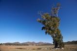 Australasian;Australia;Australian;Australian-Outback;back-country;backcountry;backwoods;Cazneaux-Tree;eucalypt;eucalypts;eucalyptus;eucalytis;Flinders-Ranges;Flinders-Ranges-N.P.;Flinders-Ranges-National-Park;Flinders-Ranges-NP;gum;gum-tree;gum-trees;gums;national-park;national-parks;Outback;Outback-Travel;remote;remoteness;S.A.;SA;South-Australia;South-Flinders-Ranges;The-Cazneaux-Tree;tree;trees;Wilpena-Pound