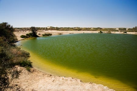 artesian-bore;artesian-bores;artesian-spring;artesian-springs;artesian-water;Australasia;Australia;Australian;Australian-Desert;Australian-Deserts;Australian-Outback;back-country;backcountry;backwoods;bore;bores;country;countryside;desert;Deserts;geographic;geography;Montecollina-Bore;mound-spring;mound-springs;natural-spring;natural-springs;oases;oasis;Outback;pond;ponds;red-centre;remote;remoteness;rural;S.A.;SA;South-Australia;spring;springs;Strezlecki-Track;Strezleki-Track;Strzelecki-Track;water;water-hole;water-holes;wilderness