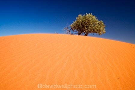 arid;Australasia;Australia;Australian;Australian-Desert;Australian-Deserts;Australian-Outback;back-country;backcountry;backwoods;Bollards-Lagoon-Road;country;countryside;desert;deserts;dry;dune;dunes;geographic;geography;outback;prints;red-centre;remote;remoteness;ripple;ripples;rock;rural;S.A.;SA;sand;sand-dune;sand-dunes;sand-hill;sand-hills;sand-ripple;sand-ripples;sand_dune;sand_dunes;sand_hill;sand_hills;sanddune;sanddunes;sandhill;sandhills;sandy;South-Australia;Strezlecki-Track;Strezleki-Track;Strzelecki-Track;wilderness;wind-ripple;wind-ripples