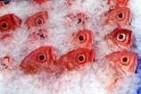 australia;sydney;prawn;shrimp;shrimps;seafood;sea;food;markets;market;fish;fishing;sell;sale;fishy;orange;prymont;blackwattle;bay;sardines;sardine;pattern