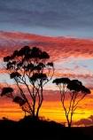 Australasian;Australia;Australian;Bay-of-Fires;Binalong-Bay;cloud;clouds;coast;coastal;coastline;coastlines;coasts;dusk;East-Tasmania;Eastern-Tasmania;eucalypt;eucalypts;eucalyptus;eucalytis;evening;foreshore;gum;gum-tree;gum-trees;gums;Island-of-Tasmania;nightfall;ocean;orange;sea;shore;shoreline;shorelines;shores;sky;slies;State-of-Tasmania;sunset;sunsets;Tas;Tasmania;tree;trees;twilight;water