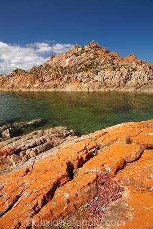 algae;Australasian;Australia;Australian;coast;coastal;coastline;coastlines;coasts;foreshore;fungi;Island-of-Tasmania;lichens;North-West-Tasmania;North-Western-Tasmania;Northern-Tasmania;orange;orange-lichen;orange-lichens;orange-rock;orange-rock-lichen;orange-rock-lichens;orange-rocks;shore;shoreline;shorelines;shores;State-of-Tasmania;Tas;Tasmania;The-North;West-Point;West-Point-State-Reserve