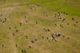 aerial;aerial-photo;aerial-photograph;aerial-photographs;aerial-photography;aerial-photos;aerial-view;aerial-views;aerials;agricultural;agriculture;animal;animals;Australasian;Australia;Australian;cattle;country;countryside;cow;cows;farm;farming;farmland;farms;field;fields;grass;grassy;Herbivore;Herbivores;Herbivorous;Island-of-Tasmania;Livestock;mammal;mammals;meadow;meadows;new-zealand;North-Western-Tasmania;North-WestTasmania;Northern-Tasmania;Northwestern-Tasmania;NorthwestTasmania;paddock;paddocks;pasture;pastures;rural;Stanley;Stanley-Peninsula;State-of-Tasmania;stock;Tas;Tasmania;The-North