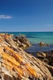algae;Ann-Bay;Australasian;Australia;Australian;coast;coastal;coastline;coastlines;coasts;foreshore;fungi;Green-Point;Greent-Pt;Island-of-Tasmania;lichens;Marrawah;North-West-Tasmania;North-Western-Tasmania;Northern-Tasmania;orange;orange-lichen;orange-lichens;orange-rock;orange-rock-lichen;orange-rock-lichens;orange-rocks;rock;rocks;shore;shoreline;shorelines;shores;State-of-Tasmania;Tas;Tasmania;The-North