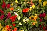 Australasian;Australia;Australian;botanic-garden;botanic-gardens;botanical-garden;botanical-gardens;City-Park;conservatories;flower;Flowers;gardens;Island-of-Tasmania;John-Hart-Conservatory;Launceston;North-Tasmania;Northern-Tasmania;State-of-Tasmania;Tas;Tasmania