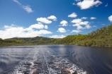 Australasian;Australia;Australian;beautiful;beauty;bush;endemic;forest;forests;Franklin-_-Gordon-Wild-Rivers-N.P.;Franklin-_-Gordon-Wild-Rivers-National-Park;Franklin-_-Gordon-Wild-Rivers-NP;Franklin-Gordon-Wild-Rivers-N.P.;Franklin-Gordon-Wild-Rivers-National-Park;Franklin-Gordon-Wild-Rivers-NP;Gordon-River;Gordon-River-Cruise-Boat;Gordon-River-Cruises;green;Island-of-Tasmania;native;native-bush;natural;nature;scene;scenic;State-of-Tasmania;Tas;Tasmania;Tasmanian-Wilderness-World-Heritage-Area;The-West;tree;trees;West-Tasmania;Western-Tasmania;Western-Wilderness;wood;woods;World-Heritage-Area;World-Heritage-Areas;World-Heritage-Site;World-Heritage-Sites
