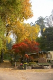 Australia;autuminal;autumn;autumn-colour;autumn-colours;autumnal;bach;baches;Bogong;Bogong-Village;cabin;cabins;color;colors;colour;colours;crib;cribs;deciduous;East-Victoria;Eastern-Victoria;fall;holiday-home;holiday-homes;holiday-house;holiday-houses;leaf;leaves;maple;maples;Mount-Beauty;Mt-Beauty;Mt.-Beauty;season;seasonal;seasons;tree;trees;VIC;Victoria;Victorian-Alps;yellow