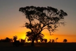 agricultural;agriculture;australasia;australia;australian;break-of-day;country;countryside;crop;crops;dawn;dawning;daybreak;dusk;eucalypt;eucalypts;eucalyptus;eucalytis;evening;farm;farming;farmland;farms;field;fields;first-light;gum;gum-tree;gum-trees;gums;horsham;horticulture;meadow;meadows;morning;mount-arapiles;mt-arapiles;mt.-arapiles;natimuk;nightfall;orange;paddock;paddocks;pasture;pastures;rural;sky;sunrise;sunrises;sunset;sunsets;sunup;tree;trees;twilight;victoria