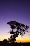 agricultural;agriculture;australasia;australia;australian;break-of-day;cart;carts;cartwheel;cartwheels;country;countryside;crop;crops;dawn;dawning;daybreak;dusk;eucalypt;eucalypts;eucalyptus;eucalytis;evening;farm;farming;farmland;farms;field;fields;first-light;gum;gum-tree;gum-trees;gums;heritage;historic;historical;history;horsham;horticulture;meadow;meadows;morning;mount-arapiles;mt-arapiles;mt.-arapiles;natimuk;nightfall;old;orange;paddock;paddocks;pasture;pastures;pony-cart;rural;sky;spoked-wheel;spoked-wheels;sunrise;sunrises;sunset;sunsets;sunup;tradition;traditional;tree;trees;twilight;victoria;waggon;waggons;wagon;wagon-wheel;wagon-wheels;wagons;wheel;wheels