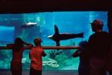 Amusement;Animal;Animals;Aquarium;Aquariums;Barrier;Barriers;Mammal;Mammals;Marine-life;Marine-mammal;Marine-mammals;observation;observe;Sea-Lion;Sea-Lions;Sea-mammal;Sea-mammals;swim;swimming;swims;Underwater-life,view;viewing