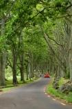 Auckland;automobile;automobiles;Avenue;Avenues;bend;bends;car;cars;corner;corners;Cornwall-Park;N.I.;N.Z.;New-Zealand;NI;North-Island;NZ;Oak;Oak-tree;Oak-trees;Oaks;One-Tree-Hill;red-car;red-cars;road;roads;travel;tree-trunk;tree-trunks;trunk;trunks;Twin-Oaks-Drive;vehicle;vehicles