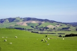 agricultural;agriculture;country;countryside;farm;farming;farmland;farms;fibre;field;fields;grass;grassy;horticulture;lamb;lush;meadow;meadows;paddock;paddocks;pasture;pastures;rural;sheep;verdant;wool;woolly;wooly