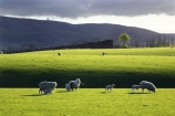 agricultural;agriculture;clinton;cloud;clouds;cloudy;country;countryside;farm;farming;farmland;farms;fibre;field;fields;grass;grassy;green;horticulture;lamb;lush;meadow;meadows;new-zealand;paddock;paddocks;pasture;pastures;rural;sheep;south-island;south-otago;verdant;wool;woolly;wooly