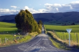 agricultural;agriculture;balclutha;clinton;country;country-road;country-roads;countryside;farm;farming;farmland;farms;fibre;field;fields;give-way;give-way-sign;grass;grassy;green;horticulture;lamb;lush;meadow;meadows;new-zealand;paddock;paddocks;pasture;pastures;road;roads;rural;sheep;south-island;south-otago;verdant;wool;woolly;wooly;yeild