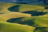 agricultural;agriculture;Balclutha;Clutha-District;Clutha-Region;country;countryside;farm;farming;farmland;farms;field;fields;grass;grassy;green;lte-light;meadow;meadows;N.Z.;New-Zealand;NZ;paddock;paddocks;pasture;pastures;rolling;rolling-farmland;rolling-hills;rural;S.I.;SI;South-Is;South-Island;South-Otago;Waitepeka