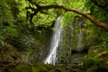 beautiful;beauty;bush;cascade;cascades;Catlins;Catlins-District;Catlins-Region;creek;creeks;endemic;falls;forest;forests;green;Matai-Falls;N.Z.;native;native-bush;natives;natural;nature;New-Zealand;NZ;Otago;rain-forest;rain-forests;rain_forest;rain_forests;rainforest;rainforests;S.I.;scene;scenic;SI;South-Is;South-Island;South-Otago;Sth-Is;Sth-Otago;stream;streams;tree;trees;water;water-fall;water-falls;waterfall;waterfalls;wet;woods