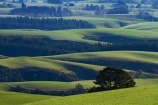 agricultural;agriculture;Clutha-District;country;countryside;farm;farming;farmland;farms;field;fields;grass;grassy;green;green-grass;meadow;meadows;N.Z.;New-Zealand;Otago;paddock;paddocks;pasture;pastures;rural;S.I.;SI;South-Is;South-Island;South-Otago;Sth-Is;Waitahuna