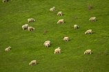 agricultural;agriculture;animal;animals;Clutha-District;country;countryside;farm;farming;farmland;farms;field;fields;grass;grassy;green;green-grass;livestock;mammal;mammals;meadow;meadows;N.Z.;New-Zealand;Otago;paddock;paddocks;pasture;pastures;rural;S.I.;sheep;SI;South-Is;South-Island;South-Otago;Sth-Is;stock;Waitahuna