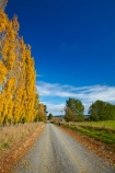 agricultural;agriculture;autuminal;autumn;autumn-colour;autumn-colours;autumnal;Clutha-District;color;colors;colour;colours;country;country-road;country-roads;countryside;deciduous;fall;farm;farming;farmland;farms;field;fields;gold;golden;gravel-road;gravel-roads;leaf;leaves;meadow;meadows;metal-road;metal-roads;metalled-road;metalled-roads;N.Z.;New-Zealand;NZ;Otago;paddock;paddocks;pasture;pastures;poplar;poplar-tree;poplar-trees;poplars;road;roads;Robson-Rd;Robson-Road;row;rural;rural-road;rural-roads;S.I.;season;seasonal;seasons;SI;South-Is;South-Island;South-Otago;Sth-Is;tree;trees;unpaved-road;unpaved-roads;yellow