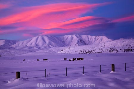 agricultural;agriculture;alpenglo;alpenglow;alpine;alpinglo;alpinglow;Altocumulus-lenticularis;animal;animals;Central-Otago;cloud;clouds;cold;Coldness;color;colors;colour;colours;country;countryside;Daytime;domestic-stock;dusk;evening;ewes;Exterior;extreme-weather;farm;farm-animals;farming;farmland;farms;fence;fence-line;fence-lines;fence_line;fence_lines;fenceline;fencelines;fences;field;fields;flock;flocks;freeze;freezing;Hawkdun-Ra;Hawkdun-Range;herbivore;herbivores;herbivorous;herd;herds;high-country;hill;hills;Ida-Ra;Ida-Range;Ida-Valley;Idaburn;Landscape;Landscapes;lens_shaped-cloud;lens_shaped-clouds;lenticular-cloud;lenticular-clouds;livestock;mammal;mammals;Maniototo;meadow;meadows;mob;mobs;Mount-Ida;mountain;mountainous;mountains;mt;Mt-Ida;Mt.-Ida;N.Z.;natural;Nature;New-Zealand;night;night_time;nightfall;NZ;Otago;Oturehua;outdoor;outdoors;outside;paddock;paddocks;pasture;pastures;rural;S.I.;Scenic;Scenics;Season;Seasons;sheep;SI;snow;snowfall;snowy;snowy-hills;snowy-mountains;South-Is;South-Is.;South-Island;Sth-Is;stock;sunset;sunsets;twilight;weather;White;winter;Wintertime;wintery;wintry
