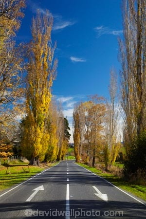 autuminal;autumn;autumn-colour;autumn-colours;autumn-tree;autumn-trees;autumnal;blue-yellow;Central-Otago;color;colors;colour;colours;deciduous;fall;gold;golden;keep-left;Lawrence;leaf;leaves;N.Z.;New-Zealand;NZ;Otago;poplar-tree;poplar-trees;raods;road;S.I.;season;seasonal;seasons;SH8;SI;South-Is;South-Island;State-Highway-8;Sth-Is;tree;trees;yellow
