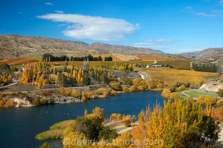 agricultural;agriculture;autuminal;autumn;autumn-colour;autumn-colours;autumnal;Bannockburn;Bannockburn-Inlet;cairnmuir-mountains;cairnmuir-range;Central-Otago;central-otago-vineyard;central-otago-vineyards;central-otago-wineries;central-otago-winery;color;colors;colour;colours;country;countryside;cromwell;crop;crops;cultivation;deciduous;fall;farm;farming;farmland;farms;field;fields;gold;golden;grape;grapes;grapevine;horticulture;kawarau-arm;lake;Lake-Dunstan;lakes;leaf;leaves;N.Z.;New-Zealand;NZ;Otago;poplar;poplar-tree;poplar-trees;poplars;row;rows;rural;S.I.;season;seasonal;seasons;SI;south-island;Sth-Is;Sth-Is.;tree;trees;vine;vines;vineyard;vineyards;vintage;water;wine;wineries;winery;wines;yellow
