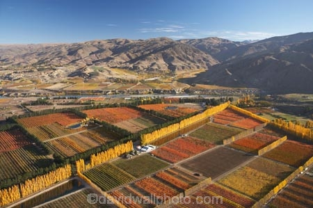 aerial;aerial-photo;aerial-photograph;aerial-photographs;aerial-photography;aerial-photos;aerial-view;aerial-views;aerials;autuminal;autumn;autumn-colour;autumn-colours;autumnal;Carrick-Range;Central-Otago;color;colors;colour;colours;country;countryside;Cromwell;crop;crops;deciduous;fall;farm;farming;farmland;farms;field;fruit;fruit-tree;fruit-trees;horticulture;irrigation-pond;irrigation-ponds;N.Z.;New-Zealand;NZ;orange;Orchard;orchards;Otago;pattern;patterns;pond;ponds;poplar;poplar-tree;Poplar-Trees;poplars;Ripponvale;row;rows;rural;S.I.;season;seasonal;seasons;shape;shapes;SI;South-Is.;South-Island;tree;trees