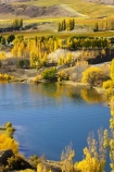 agricultural;agriculture;autuminal;autumn;Autumn-Colours;autumnal;Bannockburn-Inlet;boat;boats;cairnmuir-campground;campground;campgrounds;camping-ground;camping-grounds;Central-Otago;central-otago-vineyard;central-otago-vineyards;central-otago-wineries;central-otago-winery;color;colors;colour;colours;country;countryside;cromwell;crop;crops;cultivation;deciduous;fall;farm;farming;farmland;farms;field;fields;gold;golden;grape;grapes;grapevine;horticulture;kawarau-arm;lake;lake-dunstan;lakes;leaf;leaves;New-Zealand;poplar;poplar-tree;poplar-trees;poplars;row;rows;rural;south-island;speed-boat;speed-boats;tree;trees;vine;vines;vineyard;vineyards;vintage;water;wine;wineries;winery;wines;yellow