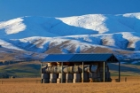 agricultural;agriculture;barn;barns;Central-Otago;cold;Coldness;corrugated-iron;corrugated-metal;corrugated-steel;country;countryside;extreme-weather;farm;farm-building;farm-buildings;Farm-Shed;Farm-Sheds;farming;farmland;farms;field;fields;freeze;freezing;Hawkdun-Ra;Hawkdun-Range;hay;hay-bale;hay-bales;hay-barn;hay-barns;hay-shed;hay-sheds;haybarn;haybarns;hayshed;haysheds;Ida-Valley;Maniototo;meadow;meadows;N.Z.;New-Zealand;NZ;Otago;Oturehua;paddock;paddocks;pasture;pastures;roofing-iron;roofing-metal;rural;S.I.;Scenic;Scenics;Season;Seasons;shed;sheds;SI;snow;snowy;South-Is;South-Island;Sth-Is;straw;weather;white;winter;winter-feed;Wintertime;wintery;wintry;zincalume