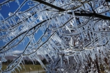 Alexandra;Central-Otago;crop;farm;farming;farms;frost-fighting;fruit-tree;fruit-trees;horticulture;ice;icicle;Icicles;icy;N.Z.;New-Zealand;NZ;orchard;orchard-tree;orchards;Otago;rural;S.I.;SI;South-Is;South-Island;spring;spring-time;spring_time;springtime;sprinklers;Sth-Is
