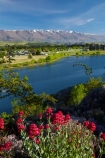 Central-Otago;Cromwell;flower;flowers;lake;Lake-Dunstan;lakes;N.Z.;New-Zealand;NZ;Otago;pink;S.I.;SI;snow;South-Is;South-Island;spring;spring-flowers;spring-time;springtime;Sth-Is;valerian-flowers;valerians