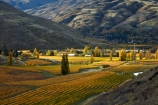 agricultural;agriculture;autuminal;autumn;autumn-colour;autumn-colours;autumnal;Bannockburn;Central-Otago;central-otago-vineyard;central-otago-vineyards;central-otago-wineries;central-otago-winery;color;colors;colour;colours;country;countryside;crop;crops;cultivation;deciduous;fall;farm;farming;farmland;farms;Felton-Rd-Vineyard;Felton-Rd-Vineyards;Felton-Rd-Wines;Felton-Road-Vineyard;Felton-Road-Vineyards;Felton-Road-Wines;field;fields;gold;golden;grape;grapes;grapevine;horticulture;leaf;leaves;N.Z.;near-Cromwell;New-Zealand;NZ;Otago;poplar;poplar-tree;poplar-trees;poplars;row;rows;rural;S.I.;season;seasonal;seasons;SI;South-Is.;South-Island;Sth-Is;Sth-Is.;tree;trees;vine;vines;vineyard;vineyards;vintage;wine;wineage;wineries;winery;wines;yellow