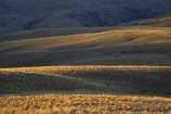 back-country;backcountry;Carrick-Range;Central-Otago;high-altitude;high-country;highcountry;highlands;N.Z.;Nevis-Valley;New-Zealand;NZ;Otago;remote;remoteness;S.I.;SI;South-Island;tussock;tussock-grass;tussocks;uplands