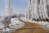 beautiful;calm;calmness;Central-Otago;clean;clear;cold;Coldness;Color;Colour;countryside;Daytime;Exterior;extreme-weather;freeze;freezing;frost;Frosted;frosts;frosty;gravel-road;gravel-roads;high-country;hoar-frost;hoar-frosts;Hoarfrost;hoarfrosts;ice;ice-crystals;icy;idyllic;Landscape;Landscapes;Maniototo;metal-road;metal-roads;metalled-road;metalled-roads;N.Z.;natural;Nature;new-zealand;NZ;Otago;Oturehua;Outdoor;Outdoors;Outside;peaceful;Peacefulness;phenomena;phenomenon;poplar-tree;poplar-trees;poplars;pure;Quiet;Quietness;rime;rime-ice;road;roads;rural;S.I.;Scenic;Scenics;Season;Seasons;SI;silence;South-Is.;South-Island;spectacular;stunning;tranquil;tranquility;view;water;weather;White;winter;Wintertime;wintery;wintry