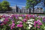 canterbury;color;colors;colour;colours;flower;flowers;garden;gardens;historical;mauve;old-university;purple;violet;white