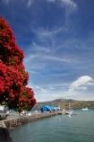 Akaroa;Akaroa-Harbor;Akaroa-Harbour;Akaroa-Wharf;Banks-Peninsula;Canterbury;dock;docks;flower;flowers;jetties;jetty;metrosideros-excelsa;N.Z.;native;native-plant;native-plants;New-Zealand;NZ;pier;piers;plant;plants;pohutakawa;pohutakawas;pohutukawa;pohutukawa-flower;pohutukawa-flowers;pohutukawa-tree;pohutukawa-trees;pohutukawas;quay;quays;S.I.;South-Is;South-Island;summer;tree;trees;waterside;wharf;wharfes;wharves