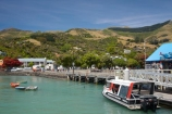 Akaroa;Akaroa-Harbor;Akaroa-Harbour;Banks-Peninsula;Canterbury;N.Z.;New-Zealand;NZ;S.I.;South-Is;South-Island;swimming-with-dolphins-boat