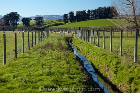 Drainage Channel And Fenced Riparian Strip Taieri Plains