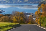 autuminal;autumn;autumn-colour;autumn-colours;autumnal;centre-line;centre-lines;centre_line;centre_lines;centreline;centrelines;color;colors;colour;colours;deciduous;driving;Dunedin;fall;harbor;harbours;leaf;leaves;N.Z.;New-Zealand;NZ;Otago;Otago-Harbor;Otago-Harbour;road;roads;S.I.;season;seasonal;seasons;SI;South-Is;South-Island;Stafford-St;Stafford-Street;Sth-Is;transport;transportation;travel;traveling;travelling;tree;trees;Unity-Park