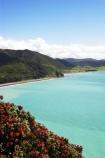 coast;coastal;coastline;east-cape;east-coast;Eastland;flower;flowers;metrosideros-excelsa;new-zealand;north-is.;north-island;ocean;oceans;plant;plants;pohutakawa;pohutakawas;pohutukawa;pohutukawa-flower;pohutukawa-flowers;pohutukawa-tree;pohutukawa-trees;pohutukawas;sea;shore;shoreline;surf;tree;trees;wave;waves;Whituare-Bay