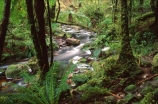alive;beautiful;beauty;brook;brooks;bubbling;bush;creek;creeks;dripping;fern;ferns;fiordland-national-park;forest;forestry;forests;green;hike;hikes;hiking;lush;majestic;middle-earth;moss;mosses;natural;nature;rain-forest;rain-forests;rain_forest;rain_forests;rainforest;rainsforests;scene;scenic;south-west;southland;stream;streams;te-wahipounamu-south_west-new;tramp;tramping;tramps;verdant;walk;walking;walks;water
