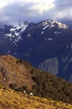 beautiful;beauty;bluffs;course;endurance;fiordland-national-park;great-walks;hike;hikes;hiking;huts;Lake-Te-Anau;lakes;majestic;marathon;middle-earth;mountain;mountains;natural;nature;peak;peaks;ridge;ridge-line;ridge_line;ridgeline;run;runner;runners;running;scene;scenic;snow-line;snow_line;snowline;south-fiord;south-west;southland;summit;summits;te-wahipounamu-south_west-new-zealand-world-hertitage-area;tracks;tramp;tramping;tramps;tussock;walk;walking;walks;water