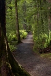 beautiful;beauty;Beech-Forest;Blechnum-discolor;bush;Crown-Fern;endemic;fern;ferns;fiordland;Fiordland-N.P;fiordland-national-park;Fiordland-NP;forest;forests;frond;fronds;great-walks;green;high;hiking;hiking-track;hiking-tracks;Kepler-Track;n.z.;national-park;National-parks;native;native-bush;natives;natural;nature;new-zealand;Nothofagus;nz;Puipui;rain-forest;rain-forests;rain_forest;rain_forests;rainforest;rainforests;S.I.;scene;scenic;SI;South-Island;South-West-New-Zealand-World-Her;southern-beeches;Southland;te-wahipounamu;te-wahipounamu-south_west-new;track;tracks;tramping;tramping-track;tree;trees;trek;treking;trekking;walking;walking-track;walking-tracks;wood;woods;world-heirtage-site;world-heritage-area