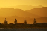 dusk;evening;Hawkes-Bay;hill;hills;N.I.;N.Z.;Napier;New-Zealand;NI;Norfolk-Pine;Norfolk-Pines;North-Island;NZ;orange;silhouette;silhouettes;sky;sunset;sunsets;tree;trees;twilight;Westshore