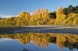 autuminal;autumn;autumn-colour;autumn-colours;autumnal;blue;calm;color;colors;colour;colours;deciduous;fall;Hawkes-Bay;leaf;leaves;N.I.;N.Z.;New-Zealand;NI;North-Island;NZ;placid;poplar;poplar-tree;poplar-trees;poplars;quiet;reflection;reflections;river;rivers;season;seasonal;seasons;serene;smooth;still;tranquil;tree;trees;water;willow;willow-tree;willow-trees;willows;yellow